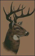 Whitetail Buck Deer Profile
