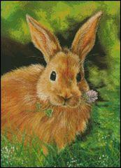 Clover Honey Bunny
