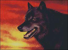 Red Skies Wolf