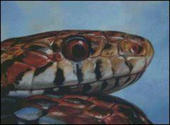 Eye of the Snake