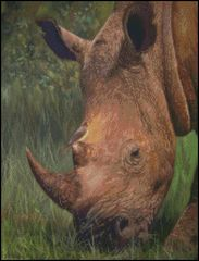 Rhino with Bird