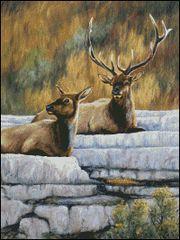 Yellowstone Royalty