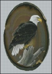 American Bald Eagle - CR