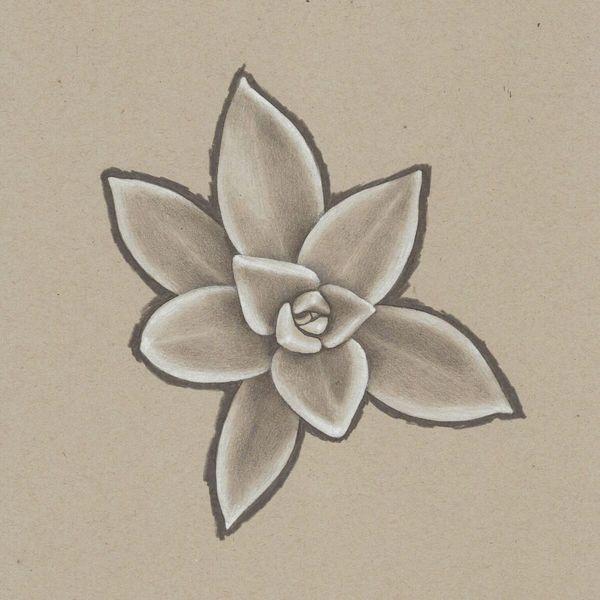 Succulent 3 Colored Pencil Drawing David Kizziar Artist