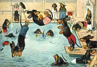 'The Swimming Pool' Adorable Vintage Dachshund Illustration Greeting Card