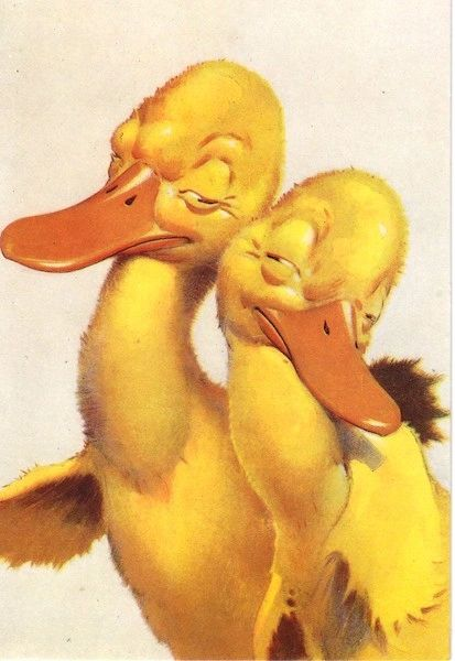Cute Vintage Illustration of 2 Ducklings in Love
