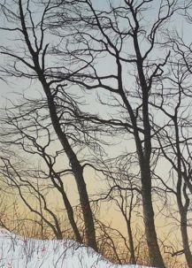 Pack of 5 November Morning. Evocative Autumn Woodland Holiday Card.