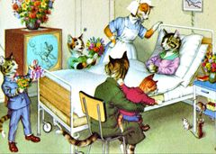 'Private Ward' Colourful Get Well Card Vintage Cat Illustration Reproduction
