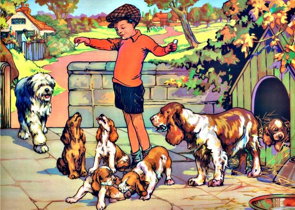 £1 Card!!! 'Treat Time' Colourful Image of Young Boy Feeding his Dogs