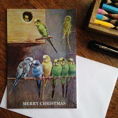 Budgerigar Christmas Card! Vintage Budgie Love!