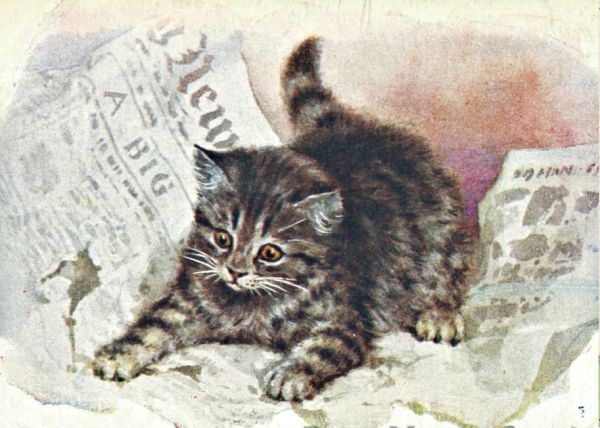 'In The News' Vintage Kitten in Newspaper Greeting Card Repro
