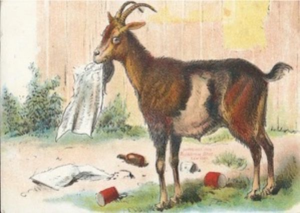 Devouring the News. Brilliant Vintage Illustration Goat Greeting Card.