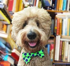 Ties: Doggie Bow Ties