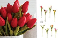 "10.5"" Real Touch Various Colors Tulip Stem"