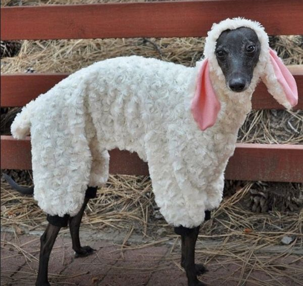 Woof in Sheep's Clothing Costume