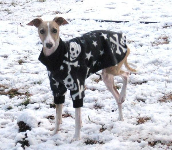 Skull and Crossbones Sweater