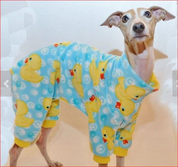 Rubber Duckies Dog Jammies