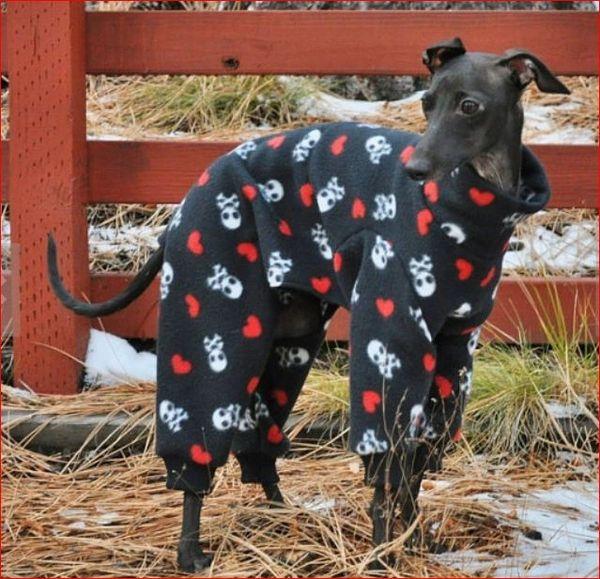 Sugar Skulls Dog Jammies
