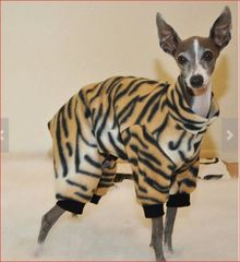 Tiger Dog Jammies