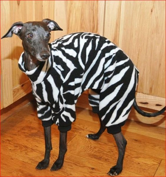 Zebra Dog Jammies