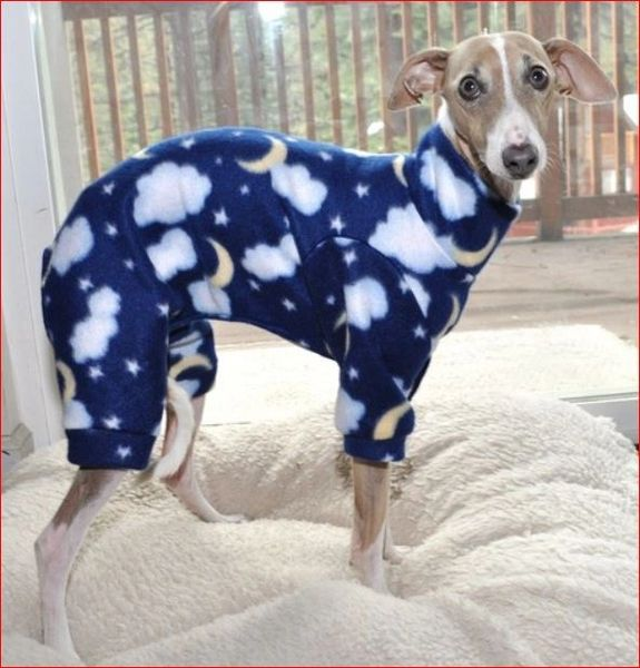 Good Nite Dog Jammies