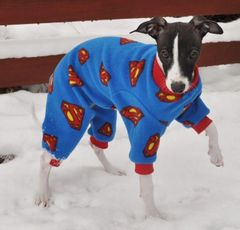 Superman Dog Jammies
