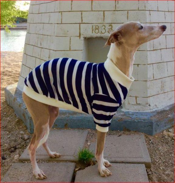 Sailor Stripes Dog Shirt