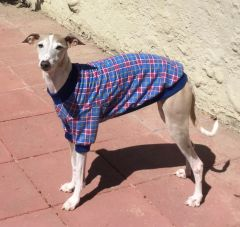 Blue Plaid Dog Shirt