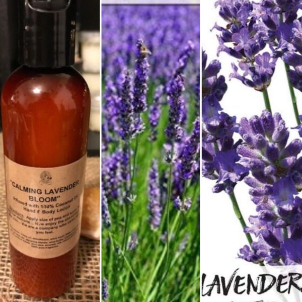 """Calming Lavender Bloom"" Coconut Oil Infused Hand and Body Lotion 6 OZ"