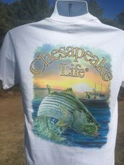 Striped Bass Short Sleeve White