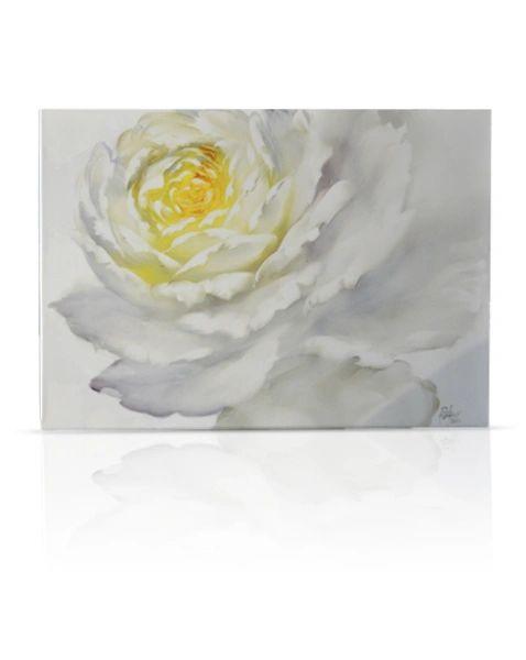 sku#6108 White Rose , flower study