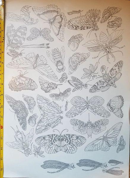 sku#4502 Decal - Butterflies, Dragonflies, Moths and Bugs