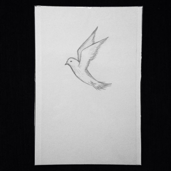 "Dove 9x6"" graphite drawing"