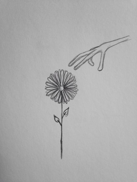 "Flower 9x6"" graphite drawing"