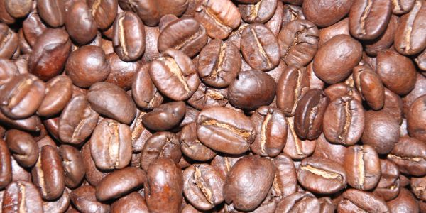 Whole medium roast Kilimanjaro Coffee beans
