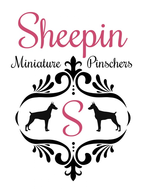 SHEEPIN MINIATURE PINSCHERS