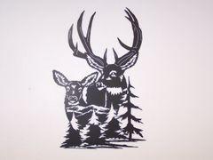 Mule Deer 5