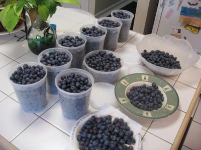 Berries....How to grow Blackberries, Blueberries, Raspberries, Strawberries.