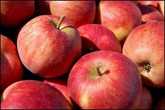 Red Apple (5 Pieces) Large