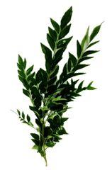MYS Curry Leaf 50G