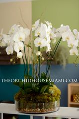 Elegant White Phalaenopsis Orchid Arrangement in a Glass Container