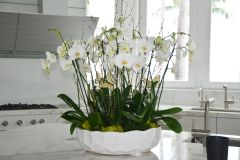 Luxury White Orchid Arrangement