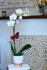 White Phalaenopsis Orchid in a Gold and White Ceramic Container