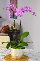 Pretty Pink Orchid Arrangement in a Gold Ceramic Vase