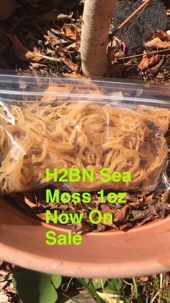 H2BN Sea Moss