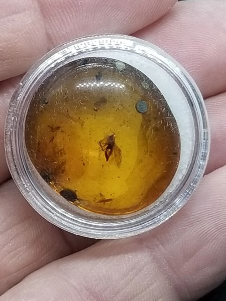 #0836 Cretaceous age Moth in Amber