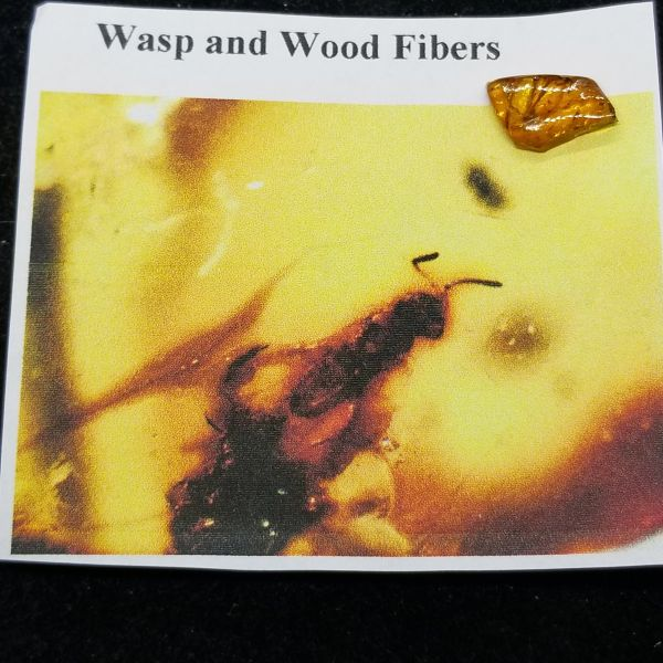 #0901 North Carolina Cretaceous Wasp in amber