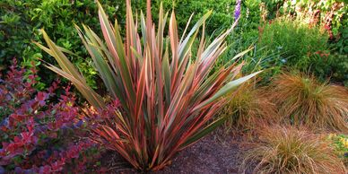 Berberis thunbergii 'Atropurpurea', Phormium 'Maori Queen', and Carex testacea