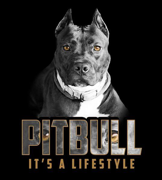 Pitbull: It's a Lifestyle Shirt