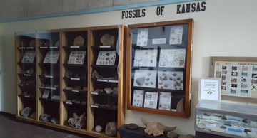 display of fossils